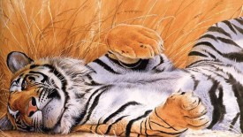 Tiger Resting In Field