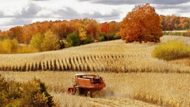 Autumn_Corn_Harvest2C_Cadillac2C_Michigan