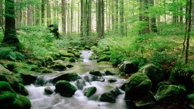 Bayerischer_Wald_National_Park2C_Germany