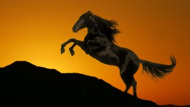 Sunset_Stallion