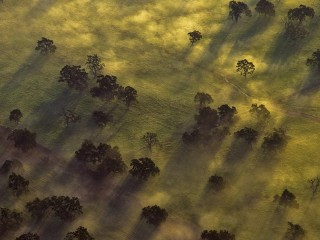 Aerial of Trees in Morning Mist