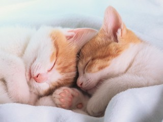 Two kittens asleep