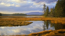 Bass Harbor Marsh and Western Mountain