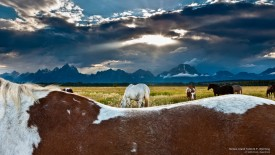 Horses, Grand Teton N.P., Wyoming