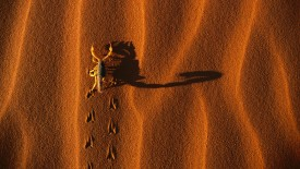Shadow-Casting Scorpion, Namib-Naukluft National Park, Namibia