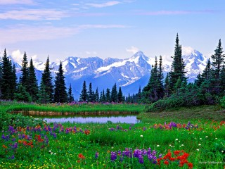Alpine Wildflowers, Northern British Columbia
