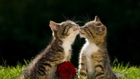 Kissing Kittens
