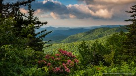 Mountain Laurel, Blue Ridge Parkway, North Carolina