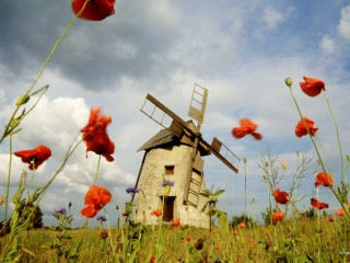 Windmill and Poppies, Sweden