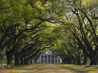 Oak Plantation, New Orleans, Louisiana