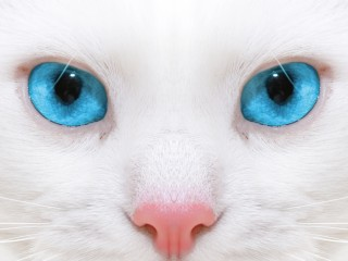 Beautiful White Cat Kitten Close-up