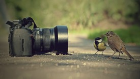 Birds Pose On Camera