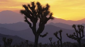 Joshua Tree National Park at Sunset, California