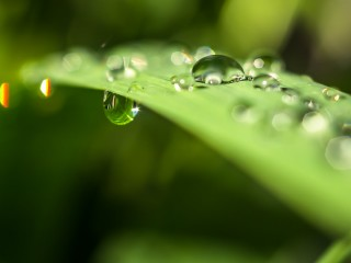 Water drops on blade of grass_HD