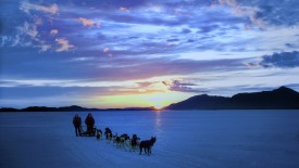 Dogsledding Near Nome, Alaska