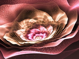 Beautiful Flower Pink Abstract