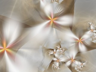 White Floral Abstracts