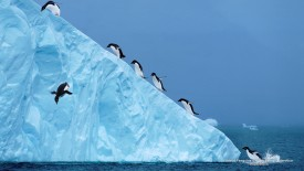 Adelie Penguins on an Iceberg, Antartica