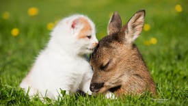 Fawn and Kitten