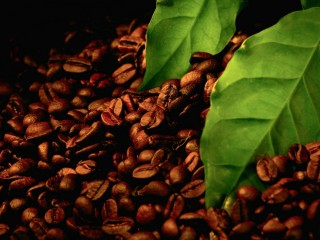 Coffee Beans With Leaves