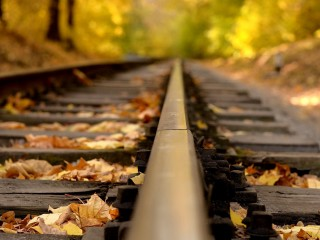 Abandoned Railway Tracks In Autumn