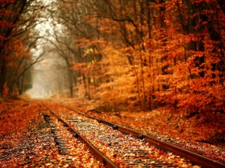 Autumn Railroad Nature