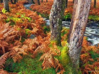 Connemara in Autumn, County Galway, Ireland