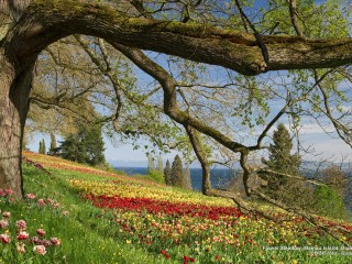 Flower Meadow, Mainau Island, Baden-Wuerttemberg, Germany