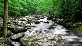 Middle Prong Little River, Great Smoky Mountains, Tennessee