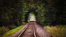 Rail Road In The Forest