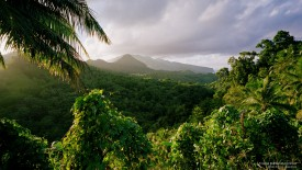 Tropical Rainforest, Dominica