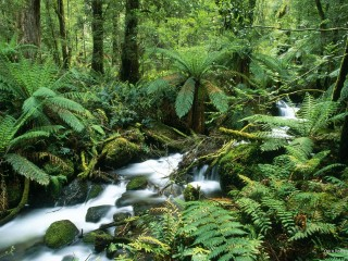 Yarra Ranges National Park, Australia