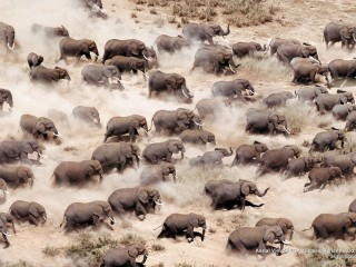 Aerial View of an African Elephant Herd, Amboseli National Park