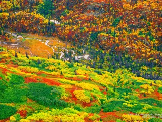 Fall Color, Wrangell-St. Elias National Park, Alaska