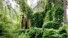 Kudzu-Covered Mill, North Carolina