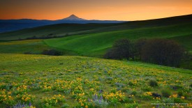 Wildflowers of the Columbia Hills, Washington