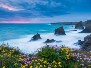 Wildflowers, Cornwall, England