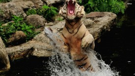 Angry Tiger In Lake