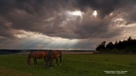Grazing Horses, Erfurt, Germany