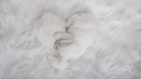 Purrfect Heart