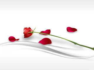 Red Rose Bud And Petals Vectors