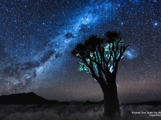 Baobab Tree Under the Night Sky, Namibia