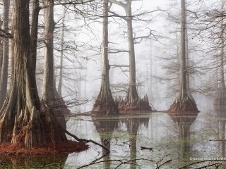 Cypress Swamp in Winter, Arkansas