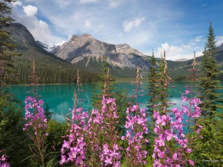 Emerald Lake, Yoho N.P., British Columbia