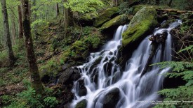 Tremont Area Falls, Great Smoky Mountains, Tennessee