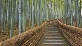 Bamboo Lined Path, Adashino Nembutsu-ji Temple, Kyoto, Japan