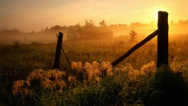 Fence and Fog at Sunrise, Burwash, Ontario