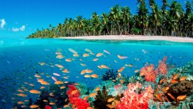 Life Under the Sea, Fiji